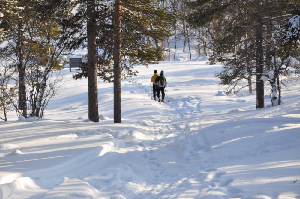 Stabbursdalen Lodge | An arctic real life fairy-tale | Scan Magazine