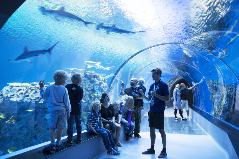 The National Aquarium Denmark | Den Blå Planet, Scan Magazine