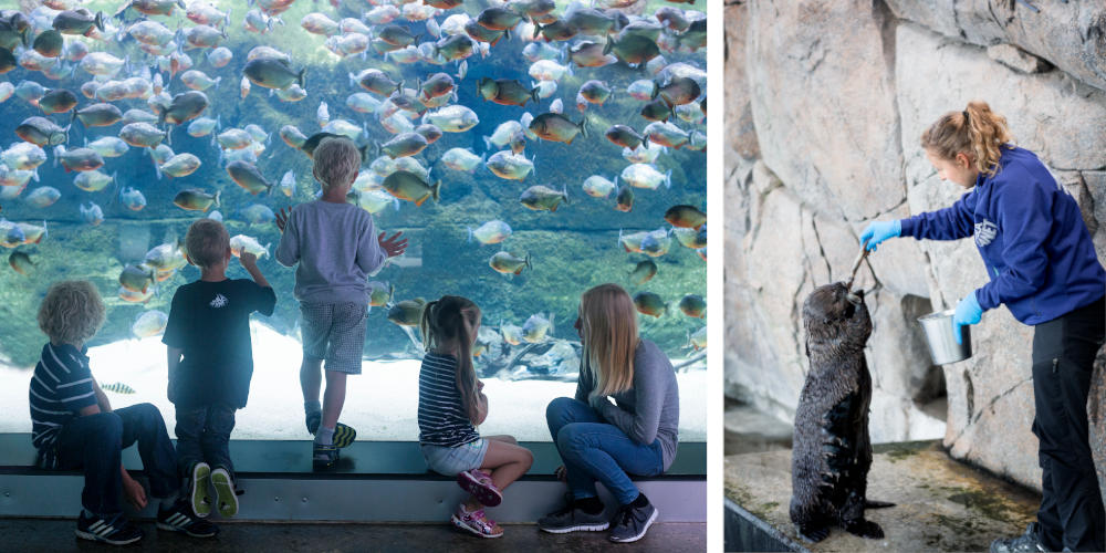 The National Aquarium Denmark | Den Blå Planet, Scan Magazine