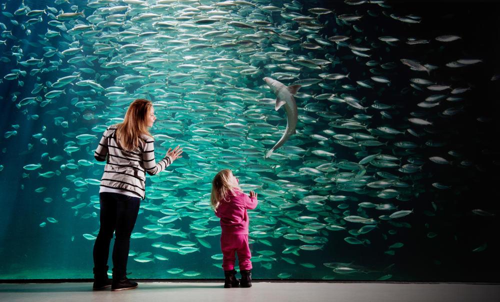 Meet the Norwegian sea life at the Ålesund Aquarium | Scan Magazine