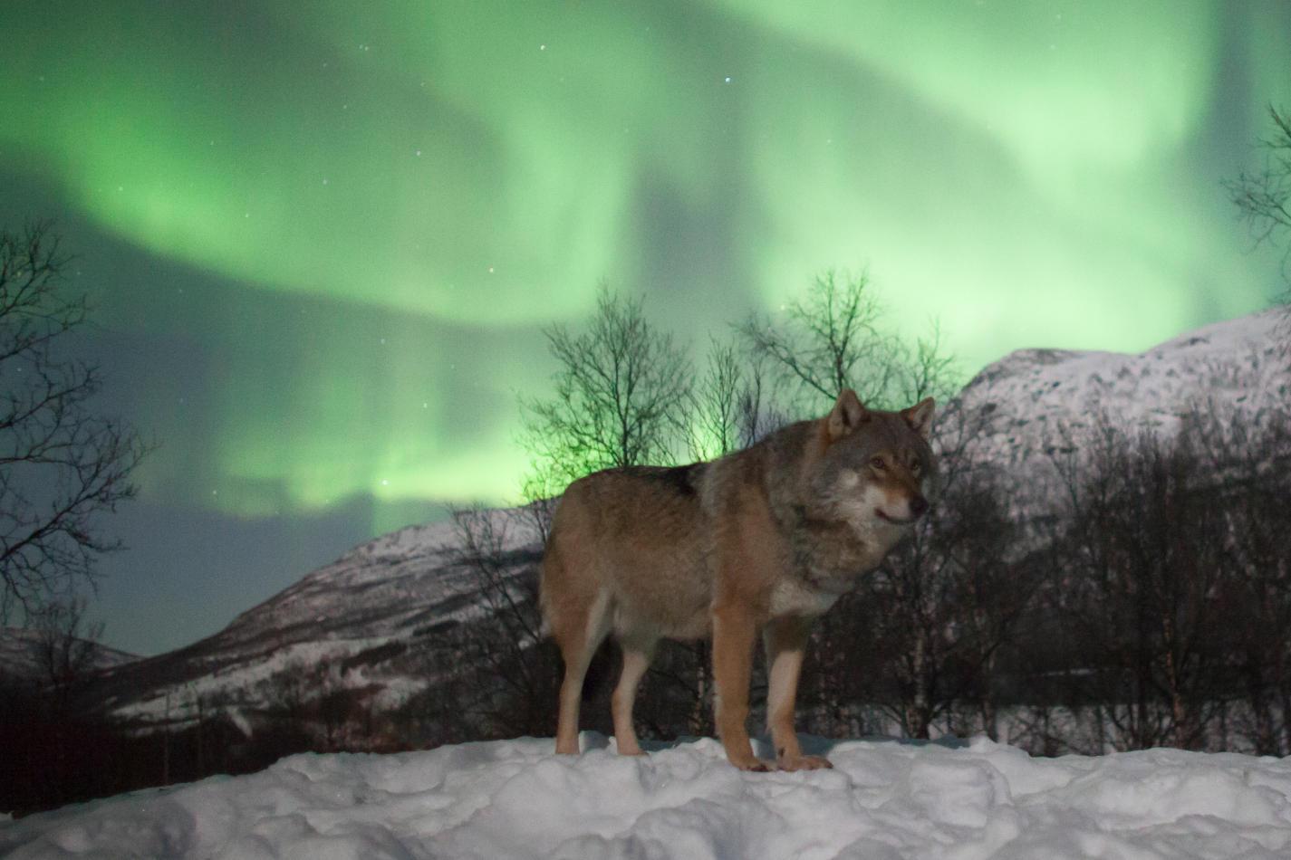 LapplandMedia & PhotoAdventures Scan magazine