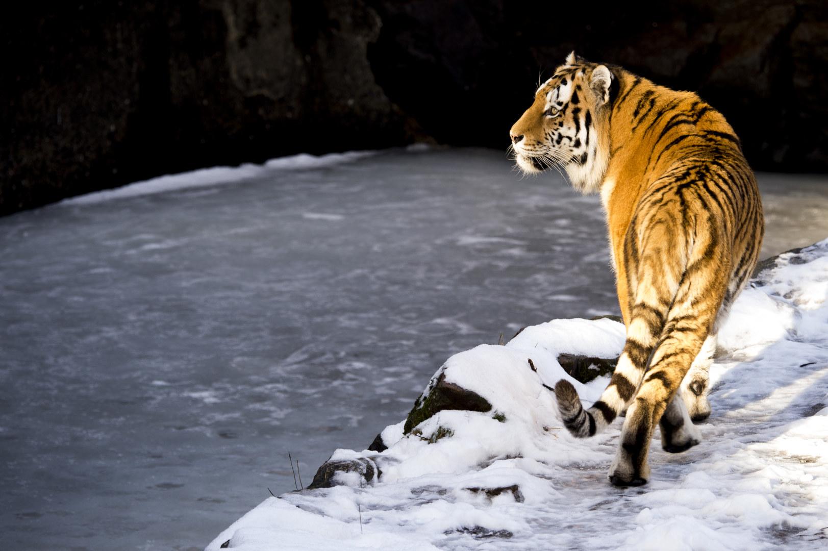 Borås djurpark i vinter. Foto: Jörgen Jarnberger / JPIXFOTO