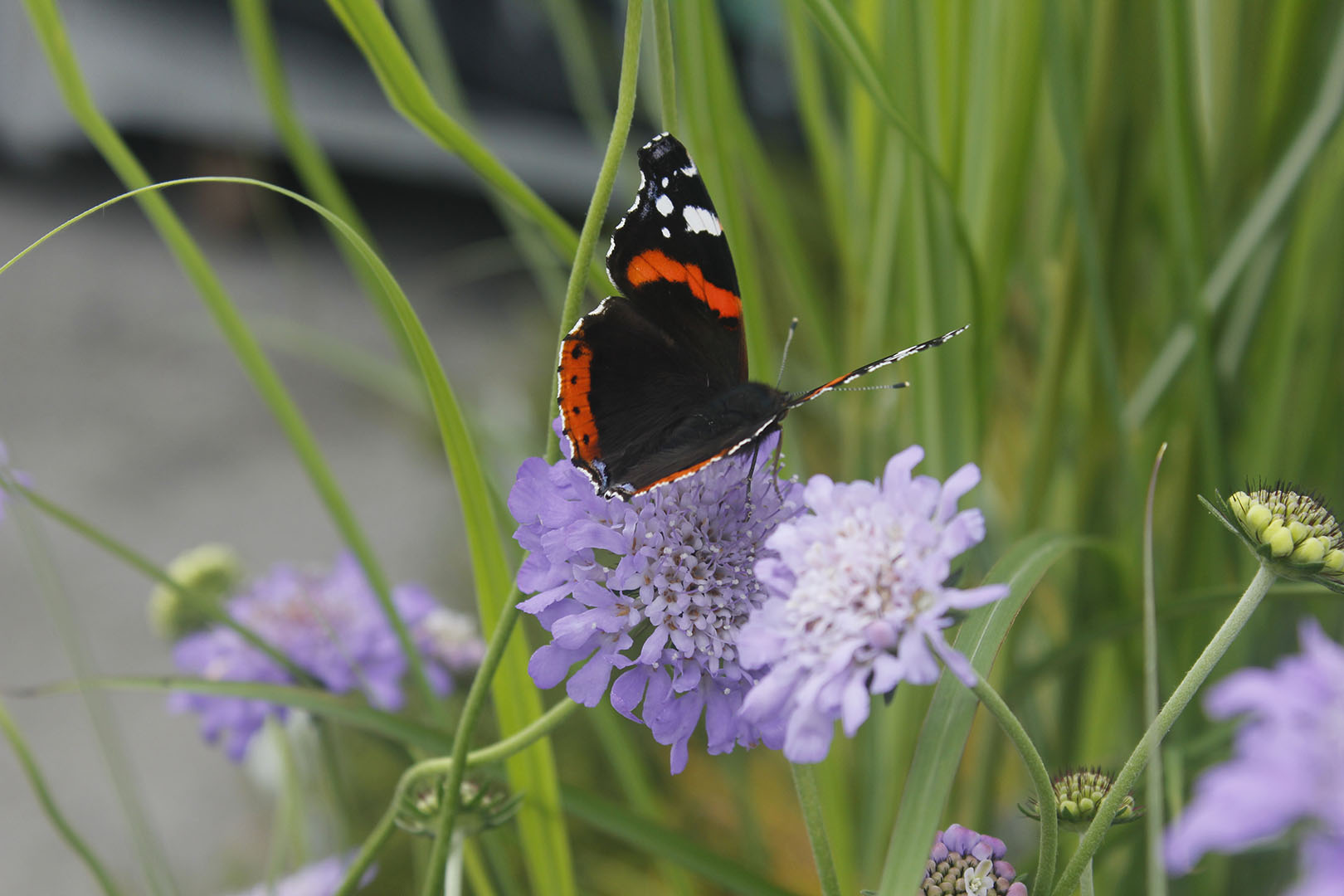 Home and Garden, help the environment - head to your garden, Butterfly, photo © Michael Elnegaard