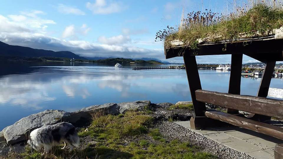 Tornes Fjordcamping: Family-friendly camping site in idyllic surroundings, Scan Magazine