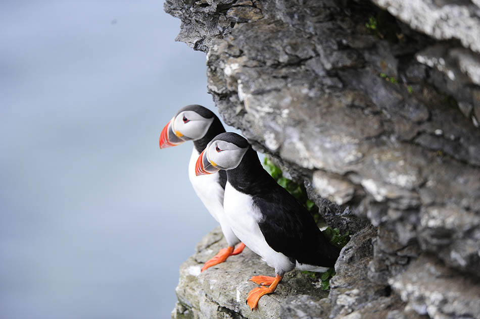 Explore 70 Degrees AS: Stunning views, majestic fjords and extraordinary wildlife