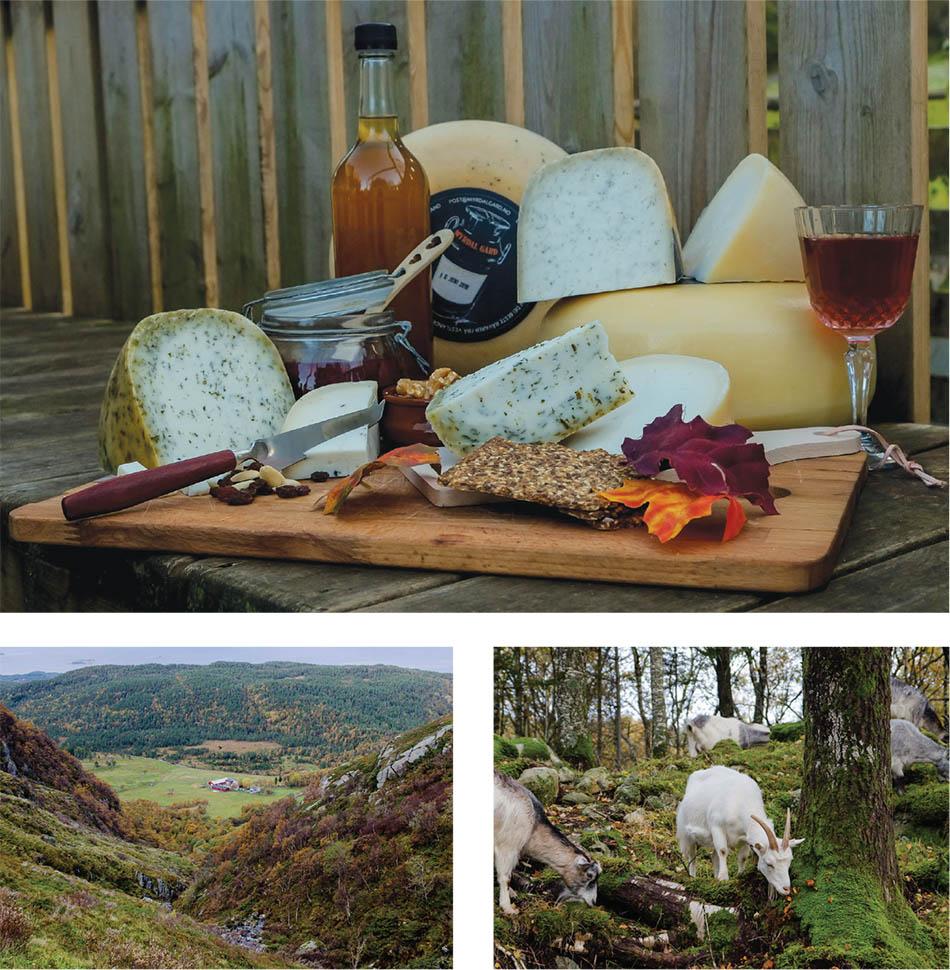Myrdal Gård   Award-winning artisan cheese from the fjords