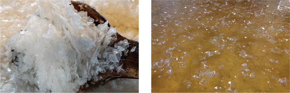 Læsø Salt Seasoned by Mother Nature